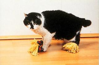 Cat mop