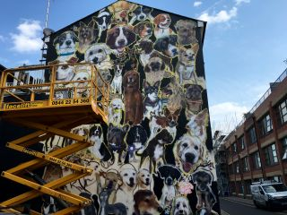 Looking good, giant dog mural, looking good.