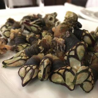Goose barnacles.