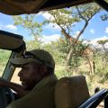 On safari with Moyo.