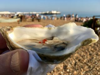 Wrapping up the week with an oyster on the beach.