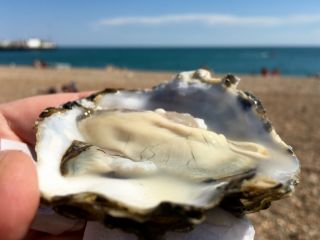 Today's oyster. (I'm loving this weather!)