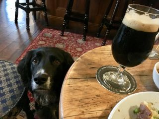 Rufus is a very good pub dog.
