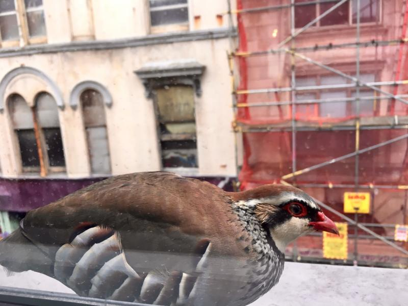 There's a very pretty bird perched on the windowsill of the @Clearleft studio. Does anyone know what it is? cc. @cpev