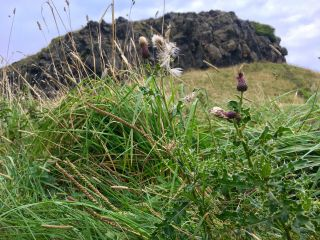 Thistle and crag.
