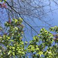 Green leaves and blue sky.