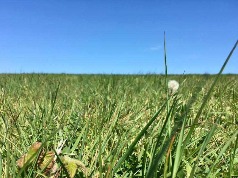 Checked in at Sheepcote Valley. Lying in the grass on a hillside — with Jessica