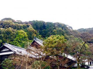Kyoto rooftops.